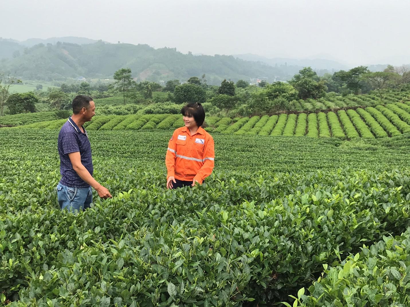 Masan High-Tech Materials hỗ trợ nông dân sản xuất chè theo hướng VietGAP, hữu cơ - Ảnh 1.