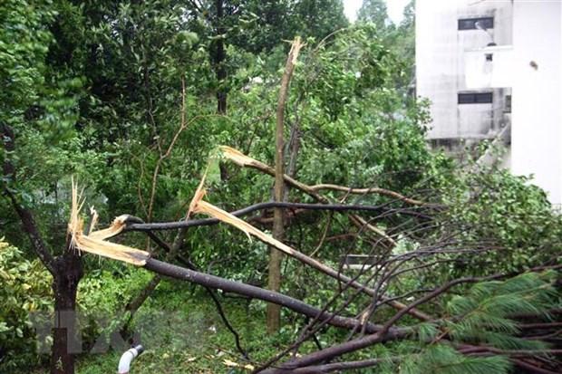 Những thiệt hại ban đầu do bão số 9 tại Phú Yên, Quảng Nam - Ảnh 2.