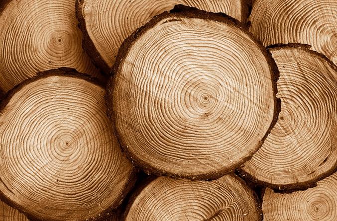 Xuất nhập khẩu Việt Nam và Áo tháng 8/2020: Xuất khẩu gỗ và sản phẩm từ gỗ tăng 146% - Ảnh 1.
