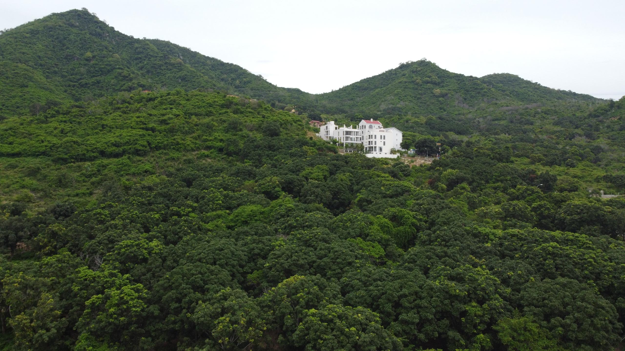 Nha Trang 'rộ' tình trạng san ủi đất rừng phân lô bán nền trái phép - Ảnh 2.