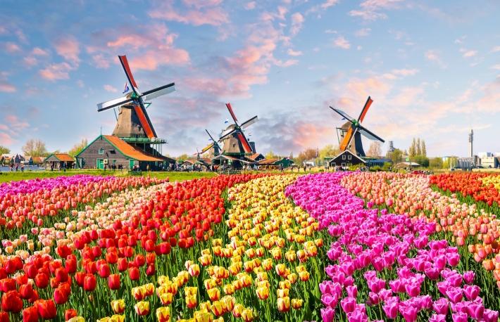 Hà Lan đang muốn đi đầu trong phát triển tiền kĩ thuật số quốc gia (nguồn: the Block)