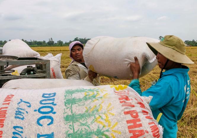 Việt Nam có được Philippines mời tham gia đấu thầu 300.000 tấn gạo? - Ảnh 1.