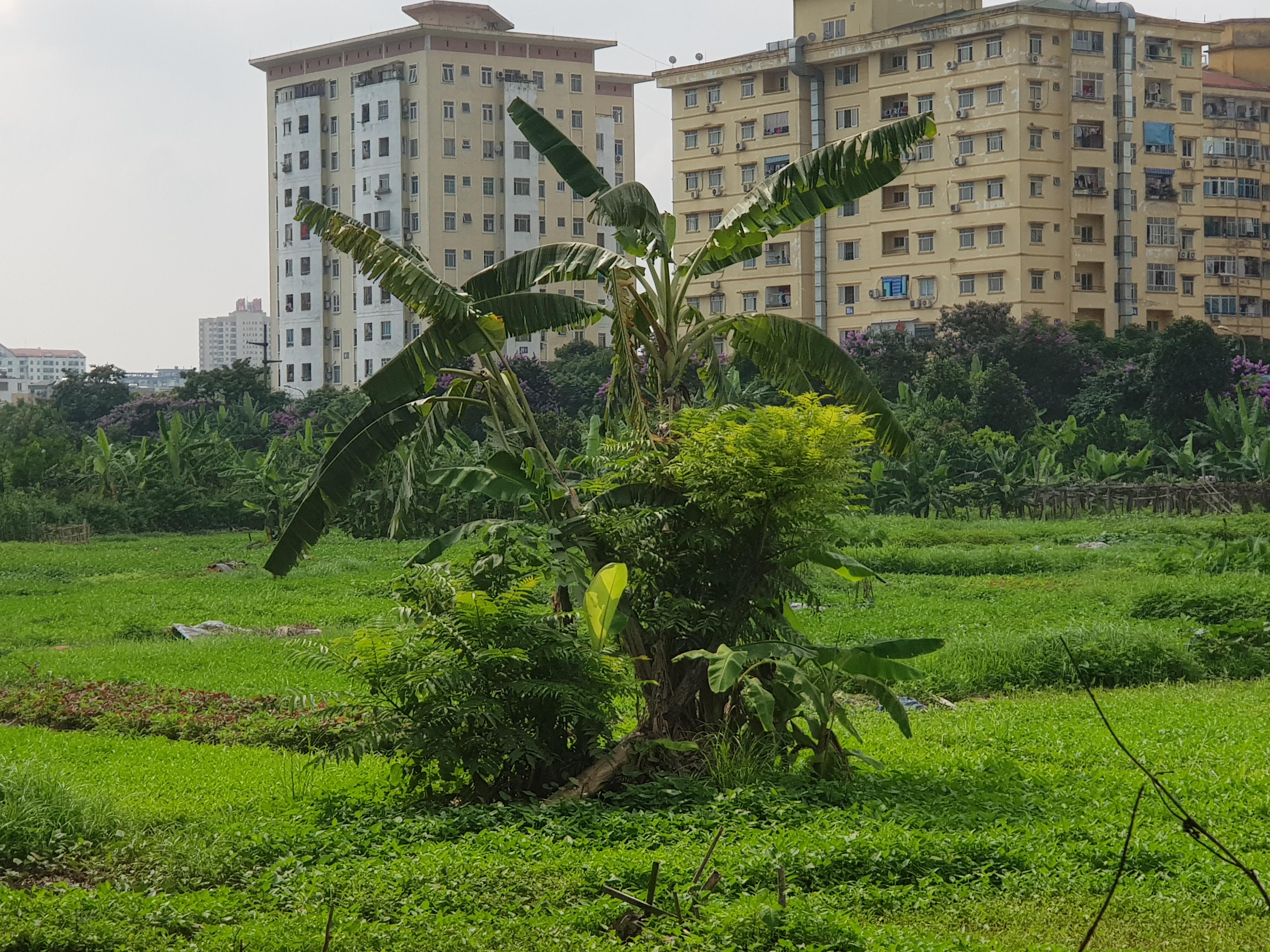 Hà Nội: Cận cảnh dự án khu đô thị hơn 3.200 tỉ đồng bỏ hoang ở quận Hoàng Mai - Ảnh 8.