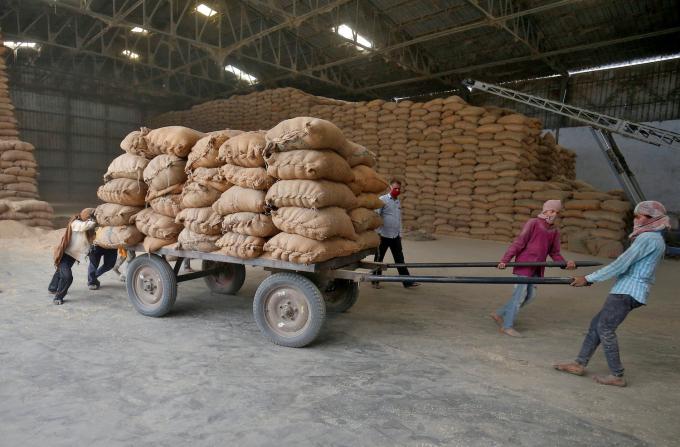 Malaysia mua 100.000 tấn gạo của Ấn Độ - Ảnh 1.