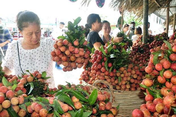 Vải thiều sớm Bắc Giang thu hoạch rộ, tiêu thụ 1.000 tấn mỗi ngày - Ảnh 2.