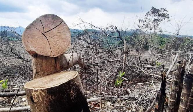 Hơn 800 ha rừng tự nhiên bốc hơi, Sở nông nghiệp TT-Huế lí giải thế nào? - Ảnh 1.