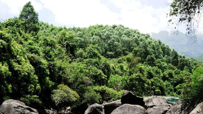 Hơn 800 ha rừng tự nhiên bốc hơi, Sở nông nghiệp TT-Huế lí giải thế nào? - Ảnh 3.