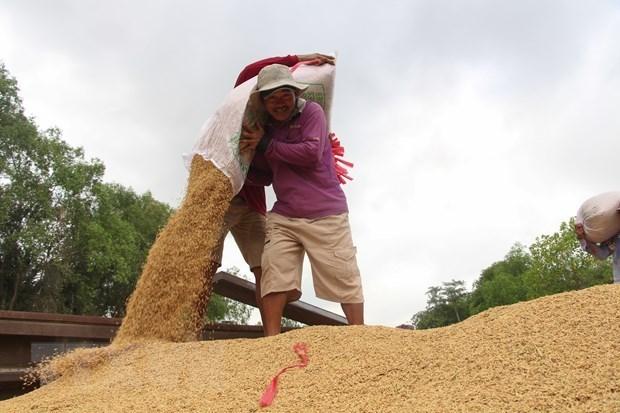 Giá gạo Việt Nam giao dịch ở mức thấp nhất trong hai tháng - Ảnh 1.