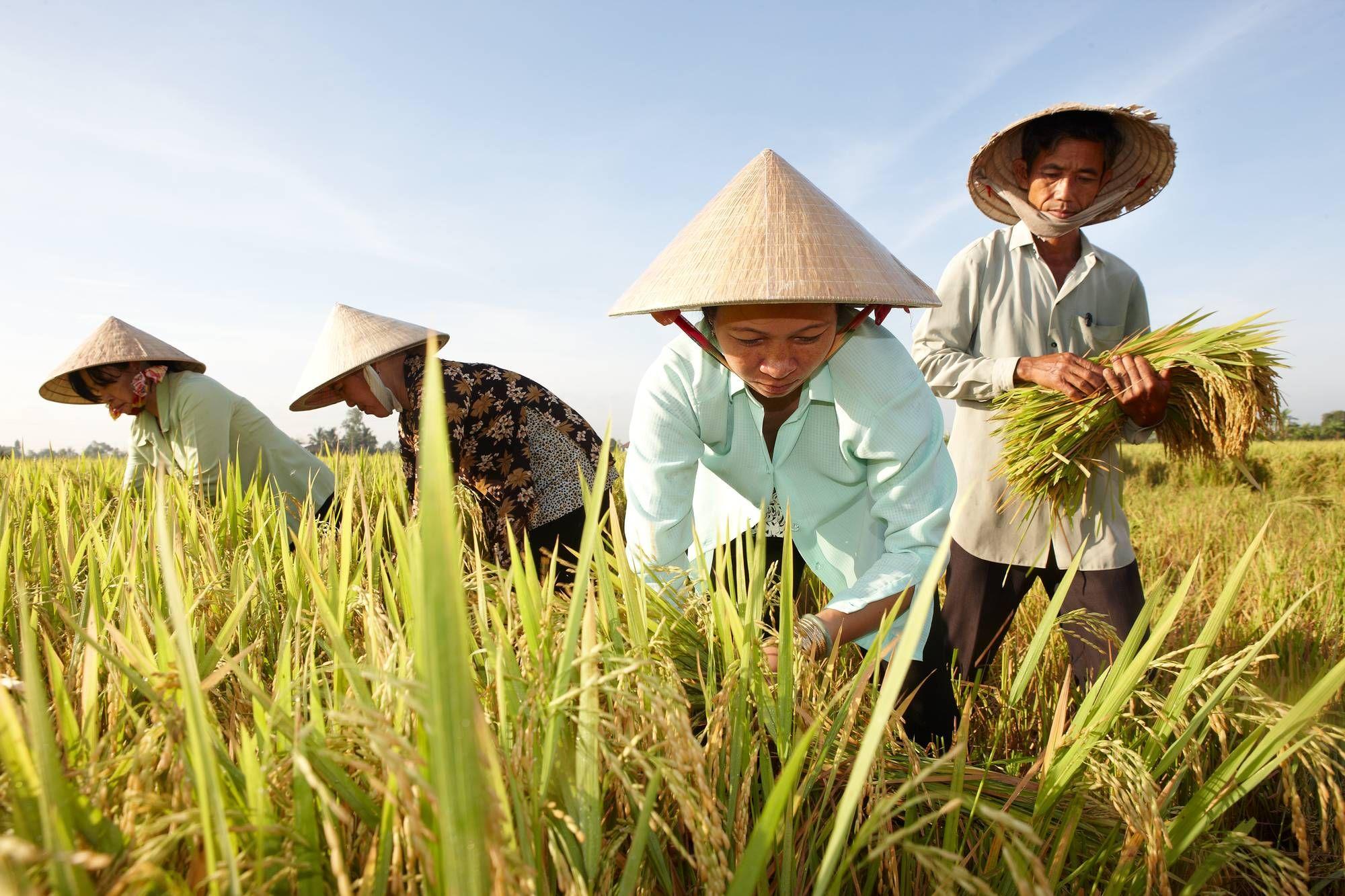 Top 10 thị trường xuất khẩu gạo Việt Nam được giá nhất 5 tháng đầu năm 2020 - Ảnh 1.