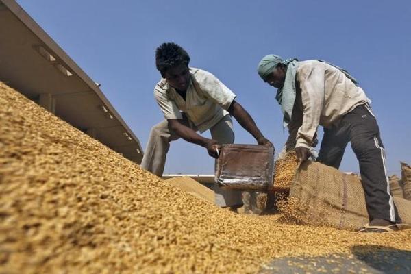 Gạo Ấn Độ cạnh tranh gay gắt với Việt Nam, Thái Lan - Ảnh 1.