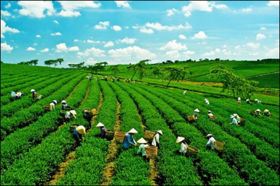 Hệ thống công cụ quản lí nhà nước về kinh tế trong nông nghiệp là gì? - Ảnh 1.