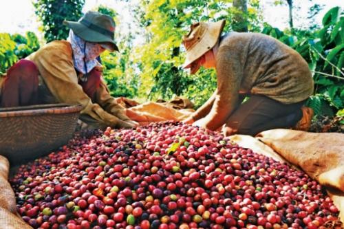Giá cà phê hôm nay 25 thang 6