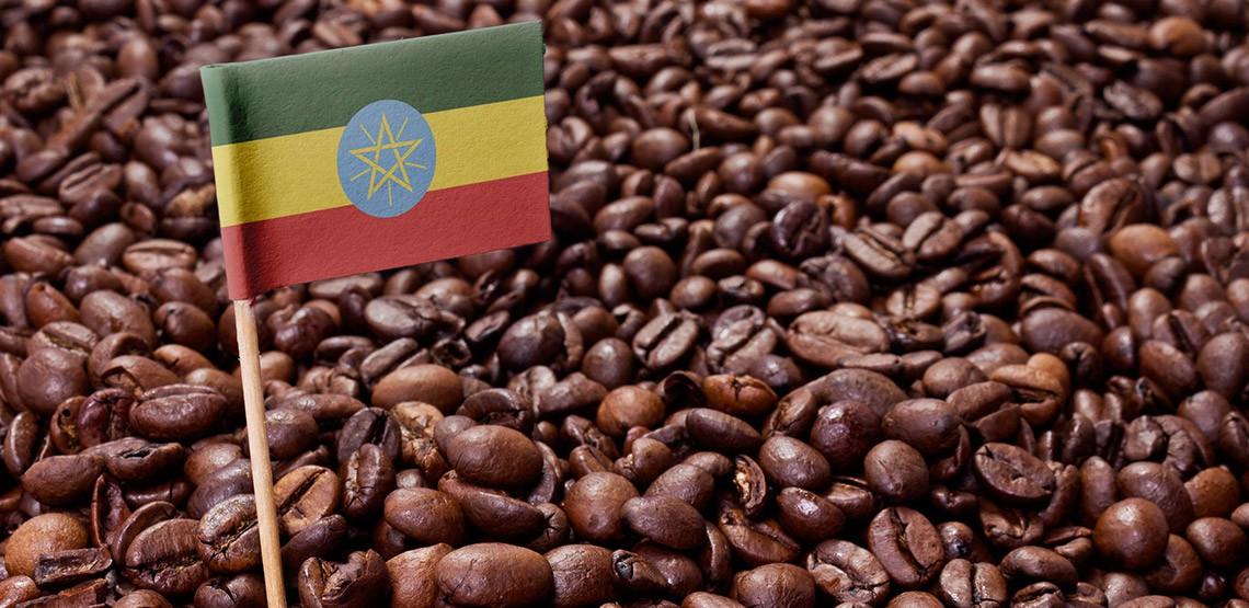 USDA: Sản xuất và xuất khẩu cà phê Ethiopia dự báo đạt mức cao trong năm 2020 - 2021 - Ảnh 1.