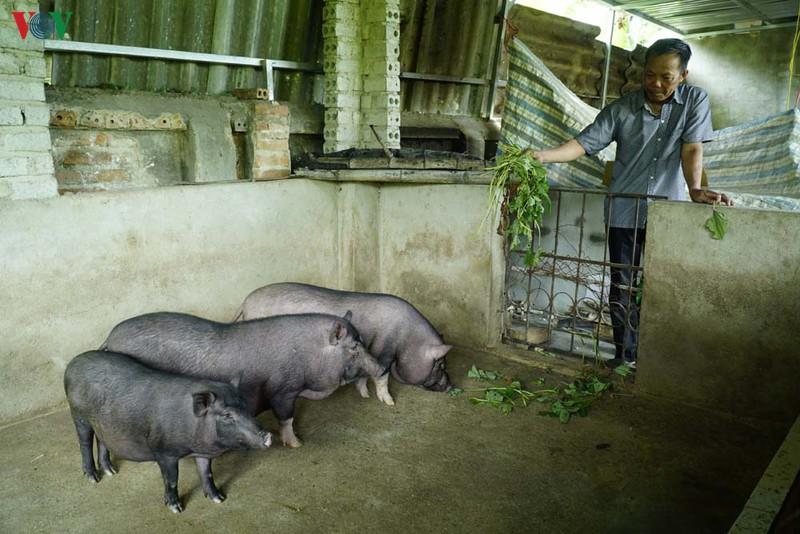 Dịch tả lợn châu Phi tái phát, nông dân Điện Biên lo lắng khi tái đàn - Ảnh 2.