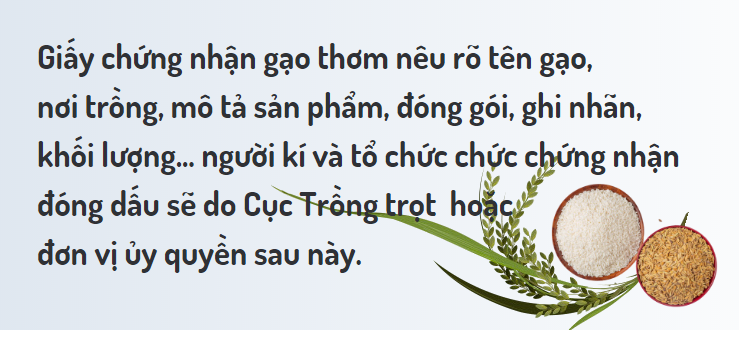 [Infographic] Hạn ngạch gạo cho Việt Nam năm 2020 theo EVFTA - Ảnh 5.