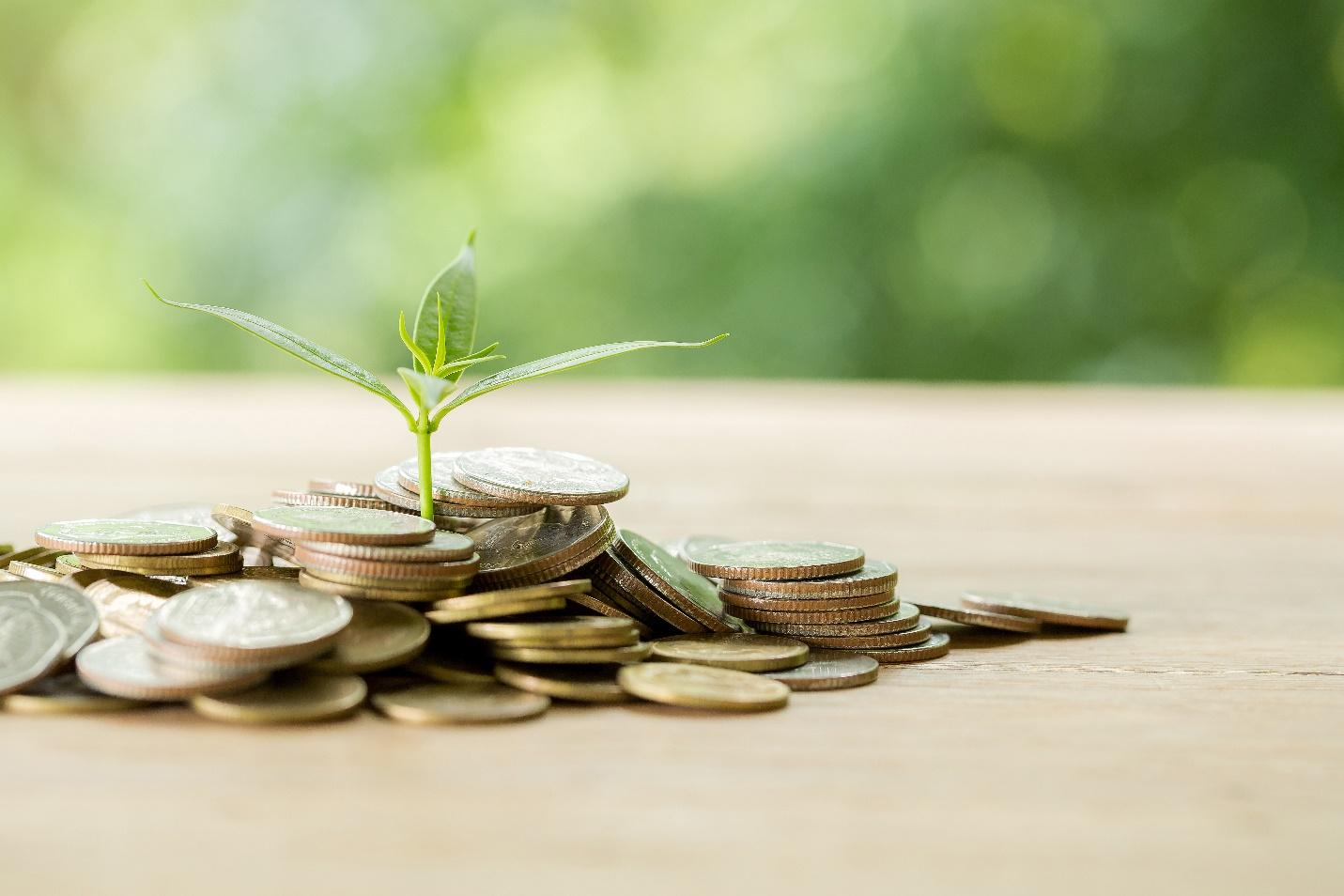 Kiến thức đầu tư: Mua tích sản cổ phiếu nên đầu tư vào đâu? - Ảnh 1.