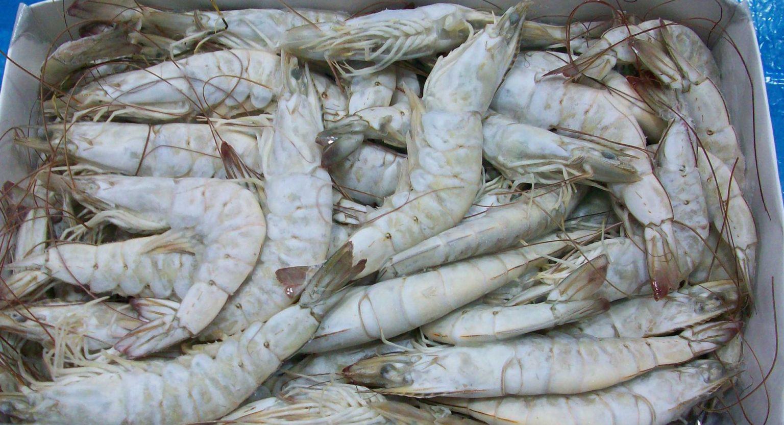 Gặp khó ở Trung Quốc, ngành tôm Ecuador chuyển hướng sang thị trường Mỹ - Ảnh 1.