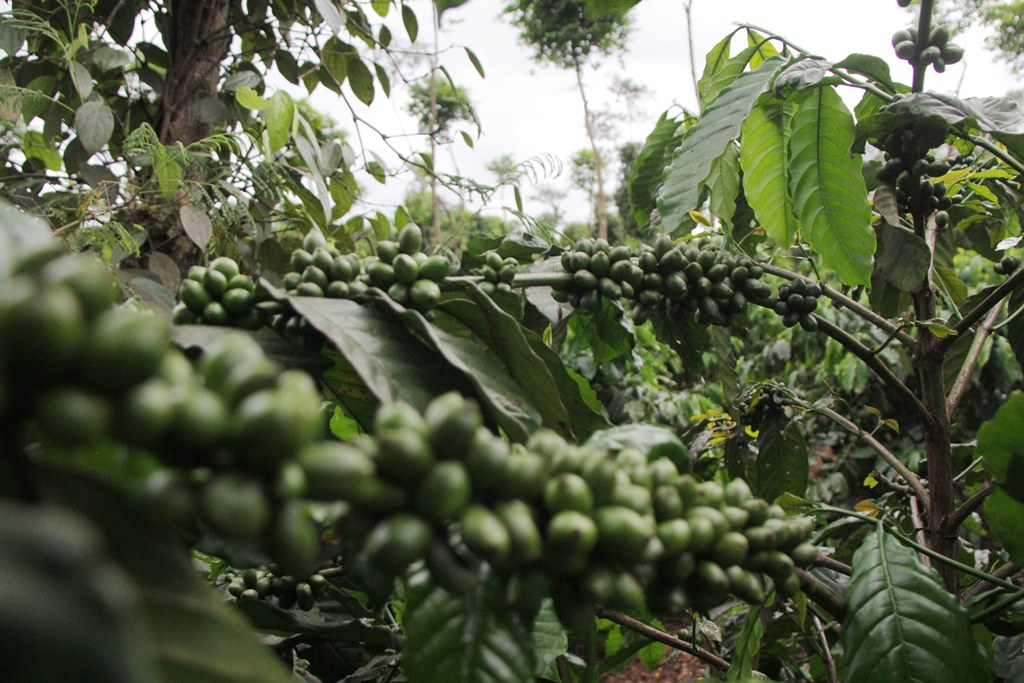 Hỗ trợ nông sản Việt Nam trước 'ngưỡng cửa' EU - Ảnh 1.