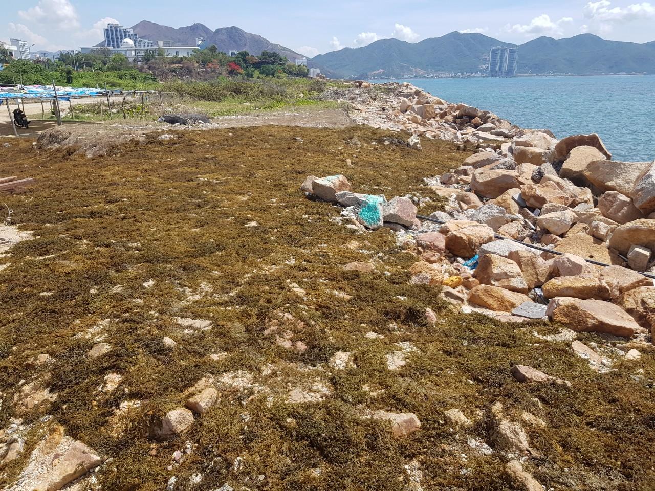Khánh Hòa lên phương án thu hồi dự án Nha Trang Sao - Ảnh 2.