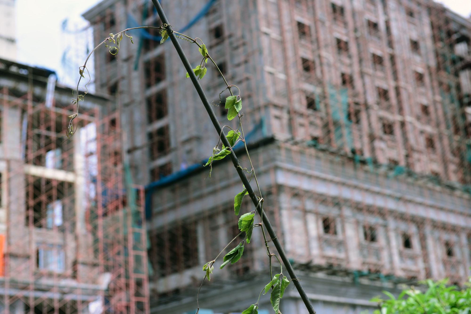 Dự án TTTM Hongkong London trên 'đất vàng' Từ Sơn, Bắc Ninh bỏ hoang nhiều năm - Ảnh 19.