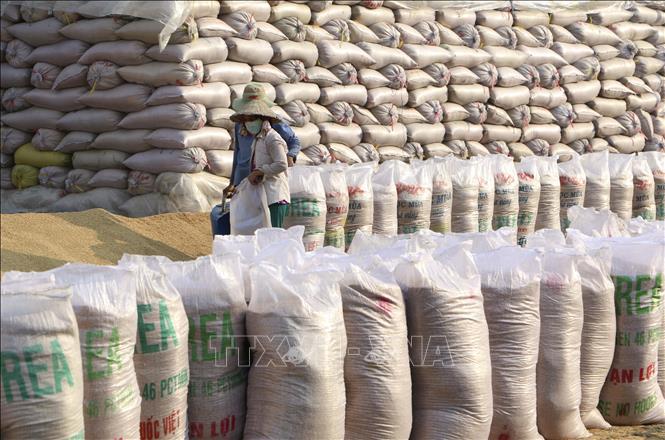 Doanh nghiệp trúng thầu gạo dự trữ quốc gia mà 'lật kèo' sẽ bị trừ điểm uy tín - Ảnh 1.