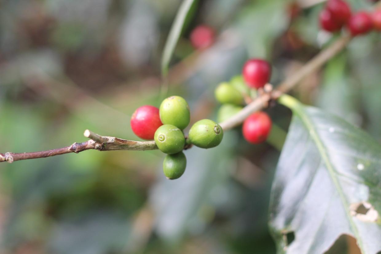 Nhìn lại năm 2020 - Một năm đầy thách thức với thị trường cà phê - Ảnh 1.