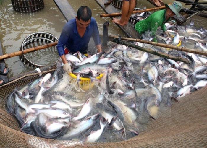 Ngành thủy sản năm 2020 bị đảo lộn trước dịch COVID-19 - Ảnh 1.