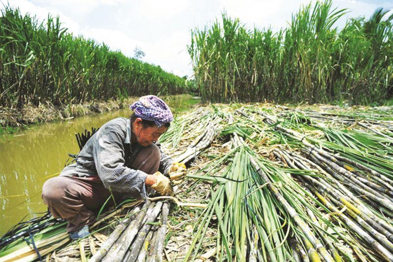 Bảo vệ sản xuất trong nước để cạnh tranh bình đẳng khi hội nhập - Ảnh 2.