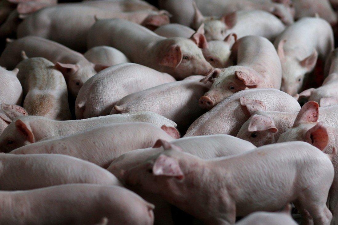 Trung Quốc chính thức tung ra hợp đồng tương lai thịt heo sau hai thập kỉ thai nghén - Ảnh 1.