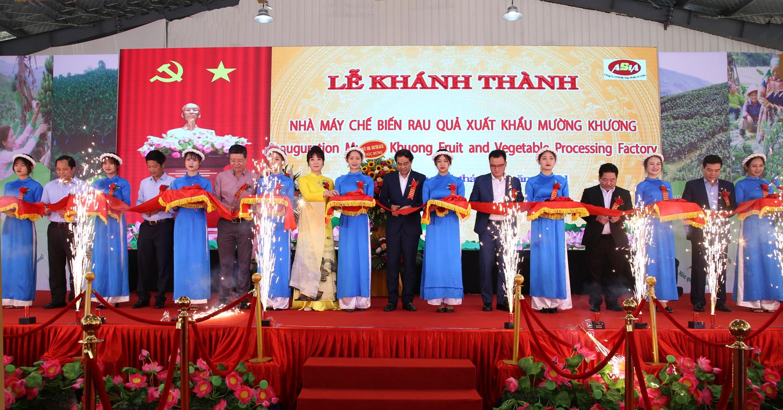 Lào Cai đưa vào hoạt động nhà máy chế biến rau quả xuất khẩu trị giá hơn 31 tỷ đồng - Ảnh 1.