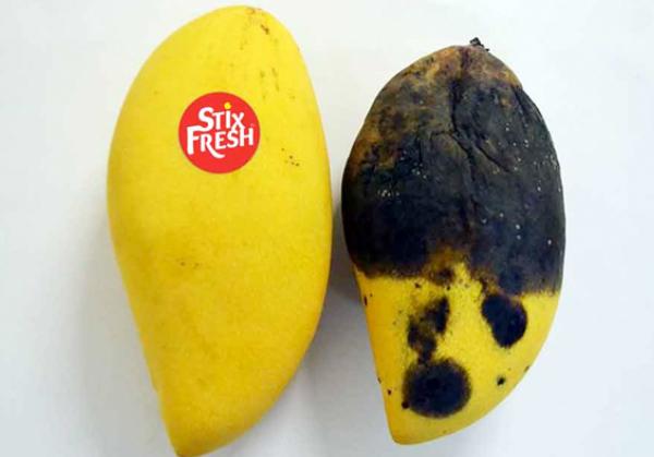 """Một nhãn dán """"thần kỳ"""" từ Malaysia có thể giữ hoa quả tươi hơn trong 2 tuần - Ảnh 2."""
