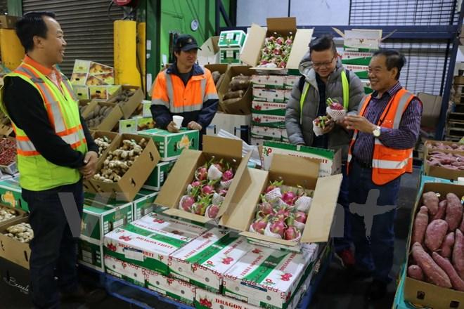 Thanh long Việt Nam mở bán tại siêu thị Australia, giá gần 300.000 đồng/kg - Ảnh 1.