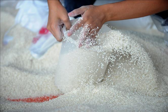 Giá gạo thế giới giảm xuống mức thấp nhất 15 tháng - Ảnh 1.