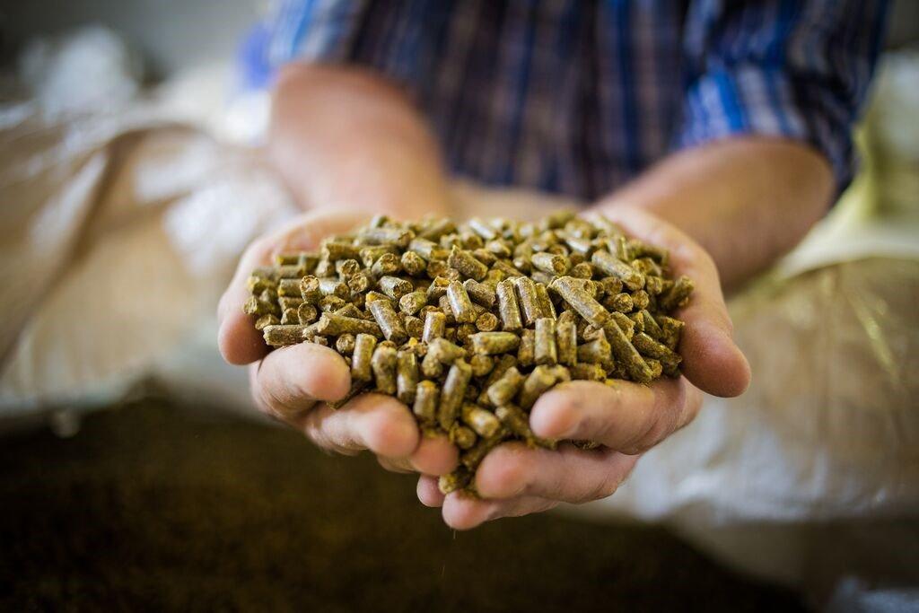Đà tăng giá thức ăn chăn nuôi chưa có hồi kết, giải pháp nào để cứu vãn tình thế? - Ảnh 3.