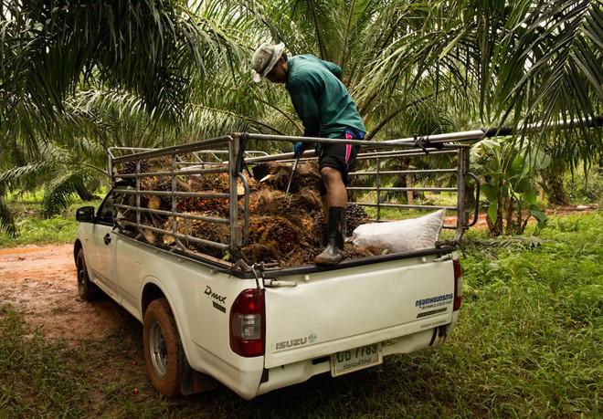Thái Lan: Cho dân vay lãi suất 0% để mua ô tô, xe giá rẻ có cửa sống - Ảnh 2.