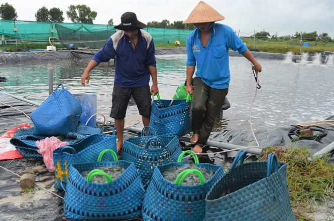 Cà Mau: Xuất khẩu tôm sang thị trường Trung Quốc tăng mạnh - Ảnh 1.