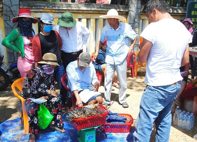 Cuối vụ, tôm hùm thương phẩm ở Bình Định tăng giá mạnh - Ảnh 1.