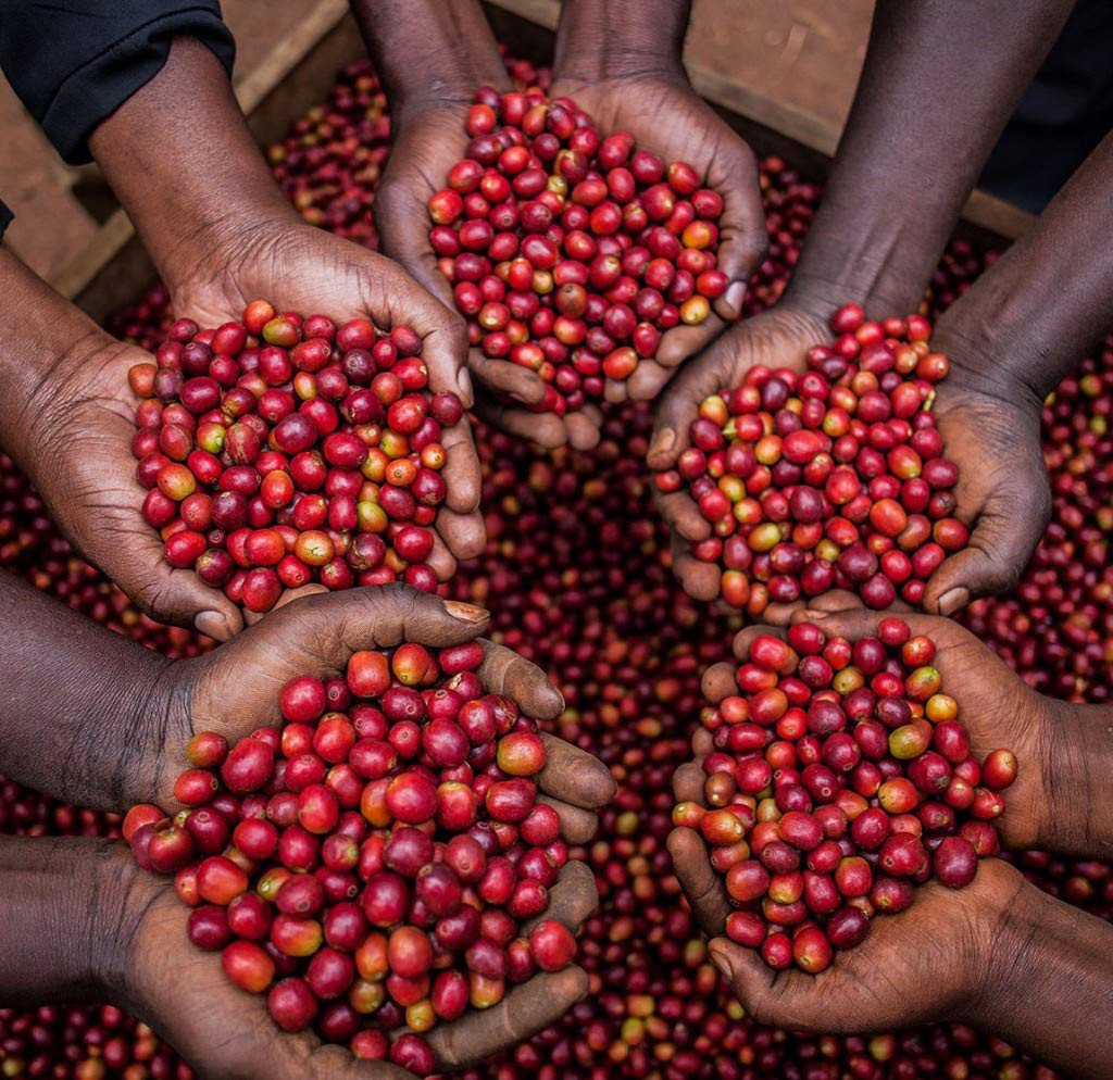 uganda-cherriesgenuine-origin-1-1571389535267443795672