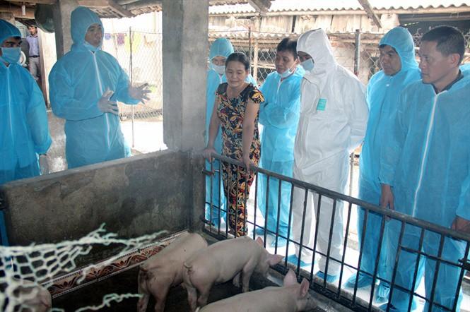 Dịch tả lợn Châu Phi tái bùng phát tại Thanh Hóa: Nhiều địa phương lơ là phòng chống dịch - Ảnh 2.