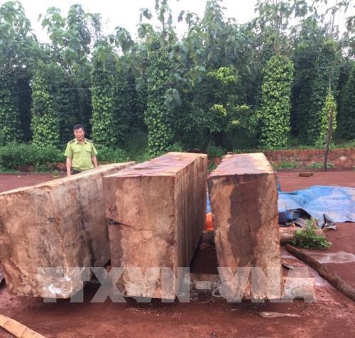 Bắt giữ khối lượng lớn gỗ cất giấu trái phép tại Đắk Nông - Ảnh 2.