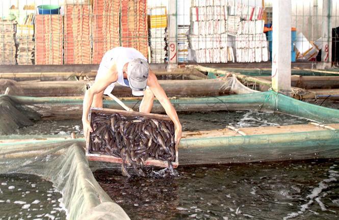 Tắc đường sang Trung Quốc, thủy sản rớt giá - Ảnh 1.