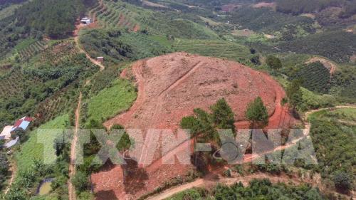 Rừng thông 20 năm tuổi tại Lâm Hà tiếp tục bị đốn hạ - Ảnh 1.