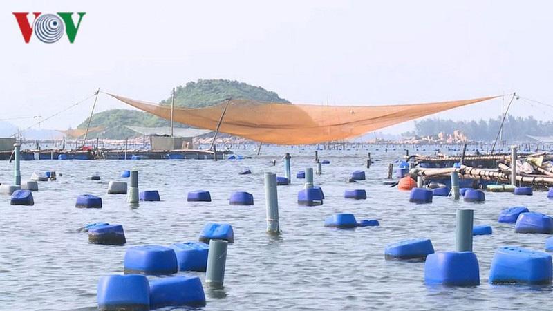Người nuôi tôm Phú Yên đang phải bán tôm với mức giá thấp. - Ảnh 1.