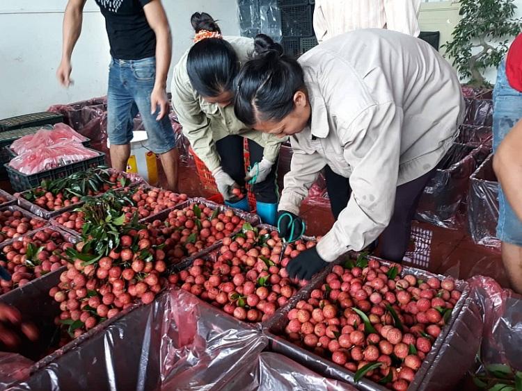 Vô số bất cập logistics 'cản chân' nông sản Việt - Ảnh 1.