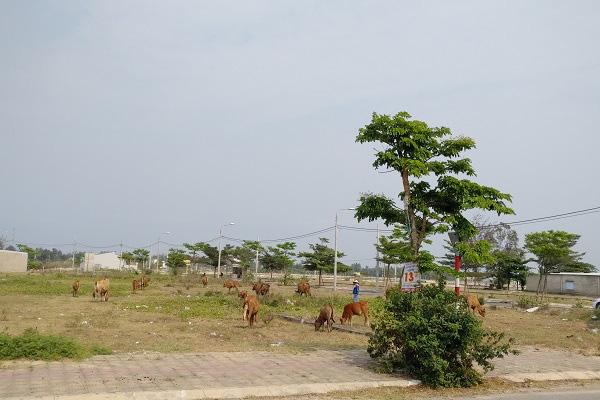 Thị trường bất động sản Nam Đà Nẵng (Kì I): Bóc mẽ chiêu 'thổi giá' cuối năm - Ảnh 1.