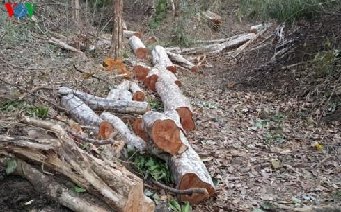 Khởi tố vụ phá gần 5ha rừng trên biên giới tại Gia Lai - Ảnh 1.