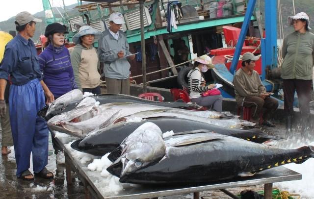 Doanh nghiệp xuất khẩu cá ngừ khốn đốn vì hàng ách tắc tại cảng - Ảnh 1.