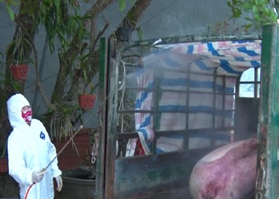 Hà Nam xuất hiện thêm 1 ổ dịch tả lợn châu Phi - Ảnh 1.