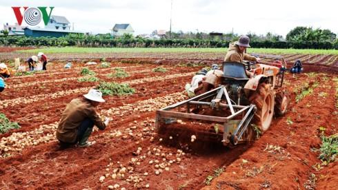 Lâm Đồng dán tem chống giả cho hơn 1.500 tấn khoai tây Đà Lạt - Ảnh 2.