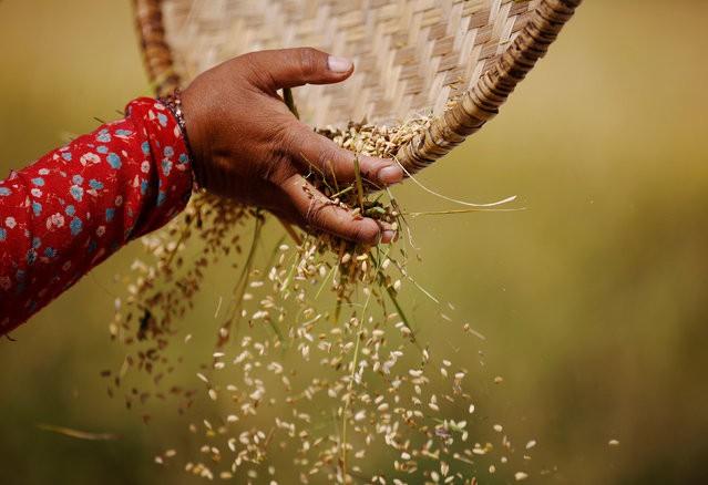 Nigeria sản xuất 90% lượng gạo tiêu thụ - Ảnh 1.